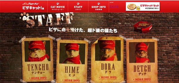pizza cat 四只猫咪
